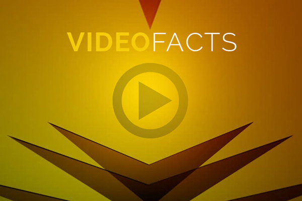Video Facts 2016 Sky jellyfish video prodcution